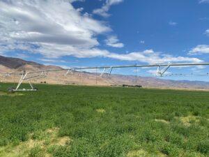 Palomino Farms Irrigation